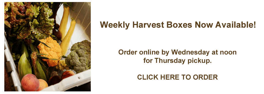 weekly harvest box
