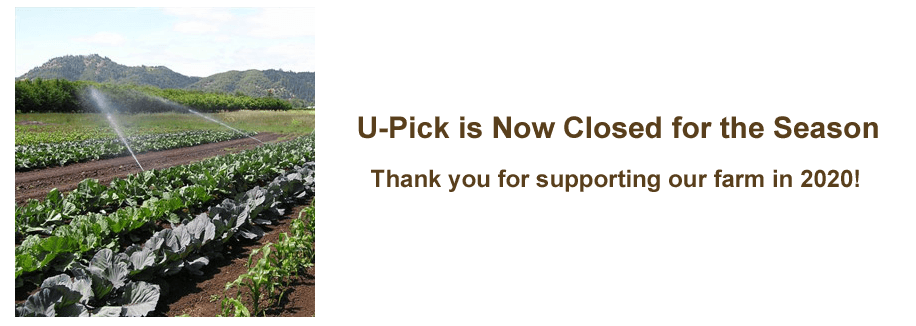 U-Pick Closed